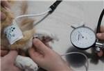 Ветеринарный тонометр – обязательный прибор для ветлечебницы