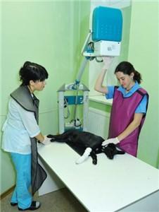Для чего в ветеринарии используют рентген-аппарат?