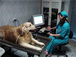 Электрокардиограф для животных и его использование в ветеринарной практике