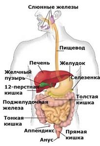 Подготовка к ректоскопии
