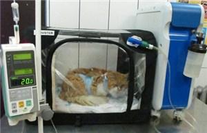 Ветеринарное лечение