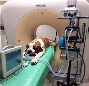 Ветеринарный диагностический томограф и его назначение