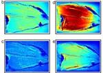 Метаматериалы усилят разрешение томографов