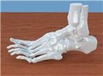 Российские ученые улучшили технологию печати костной ткани