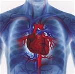 Уральские учёные математически смоделировали цифровое сердце