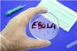 В России создан первый тест для ранней диагностики вируса Эбола