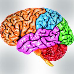 Ученые нашли новое место для речевого центра мозга