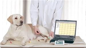 Ветеринарный электрокардиограф