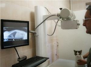 Ветеринарный рентген