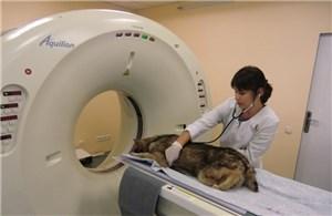 Ветеринарный томограф