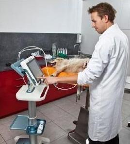 УЗ сканер ветеринарный